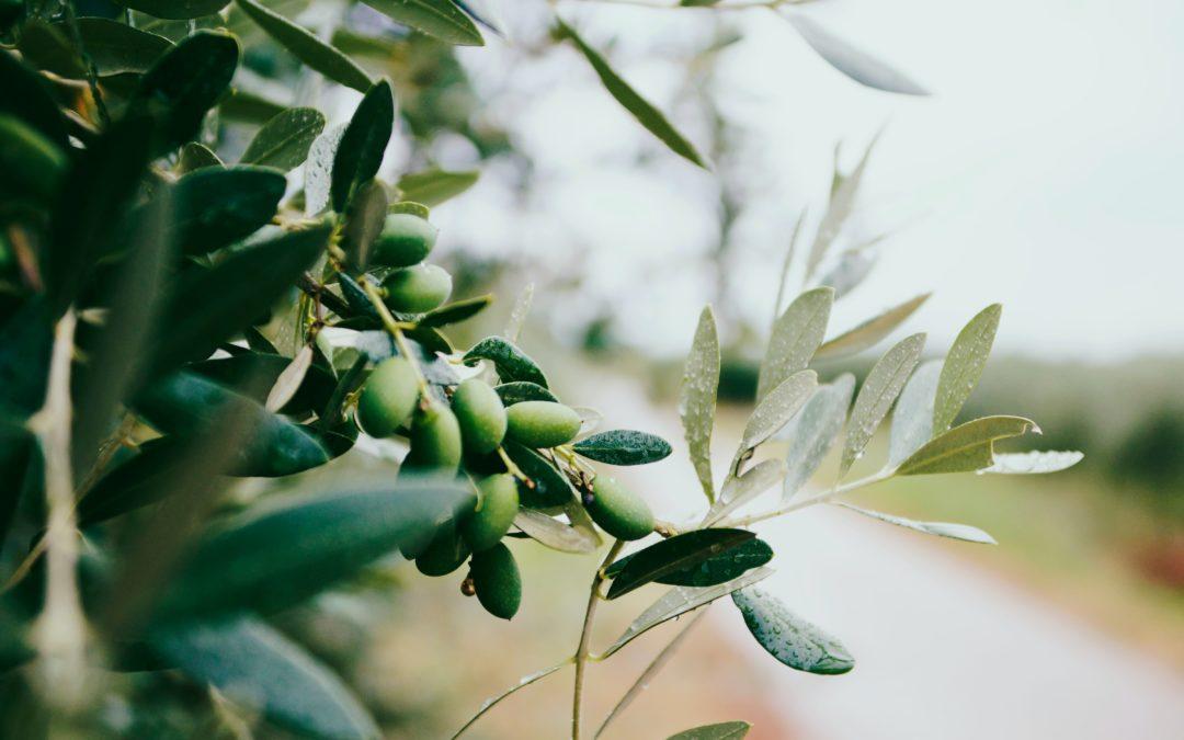 Baena: un oasis olivarero para los nuevos tiempos
